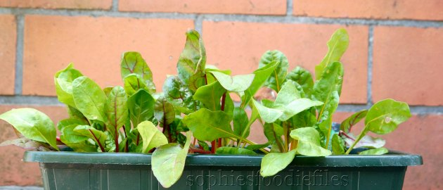 Home grown Swiss Chard leaves!