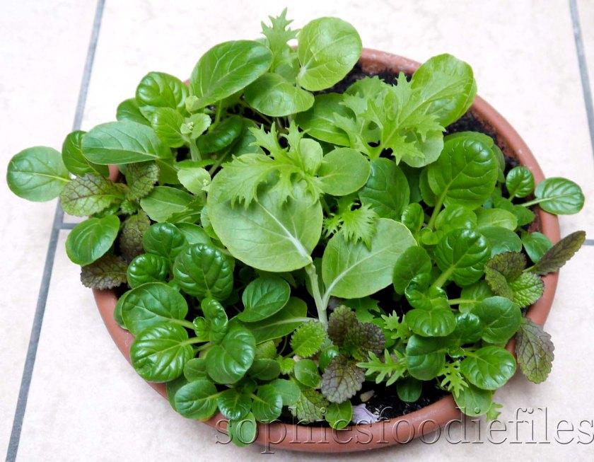 Mixed Asian salad leaves!