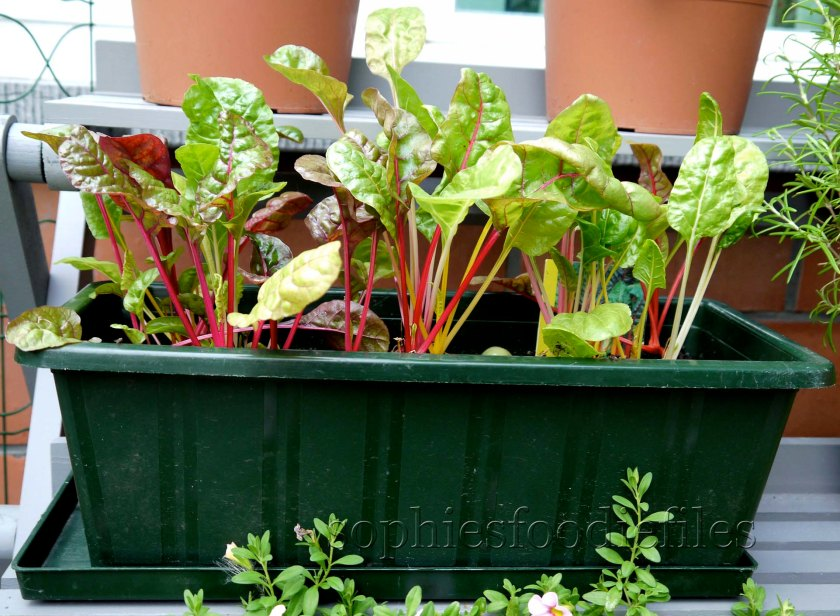 My Swiss chard leaves, that I use instead of spinach!