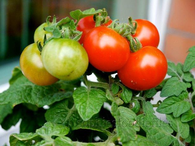 Juicy cherry tomatoes!