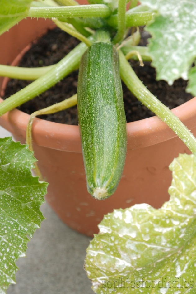 Just look at that yummy green courgette!
