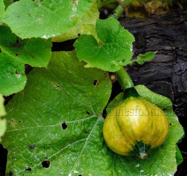 A pumpkin to be! :)