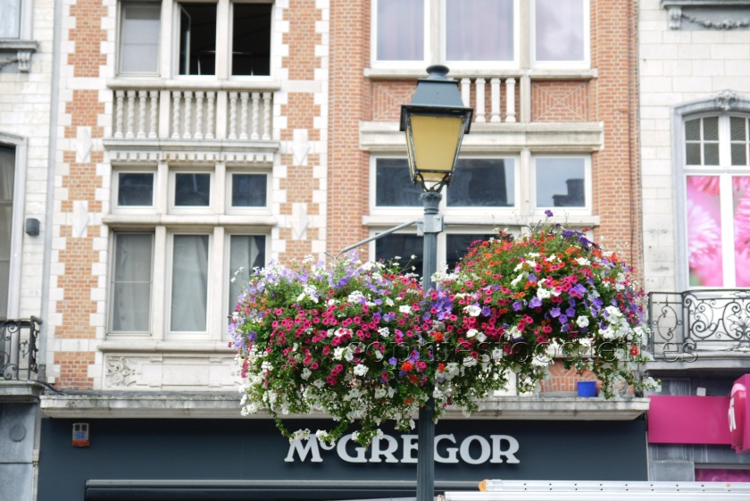 The lovely multi-clouted flowers that represent the colors of the flag from Mechelen!