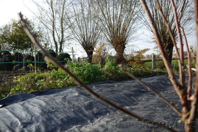 Prepraring the weeded areas for Winter!