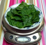 Fresh New-Zealand spinach leaves