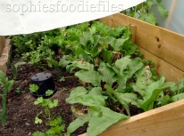 We opened the cold frame
