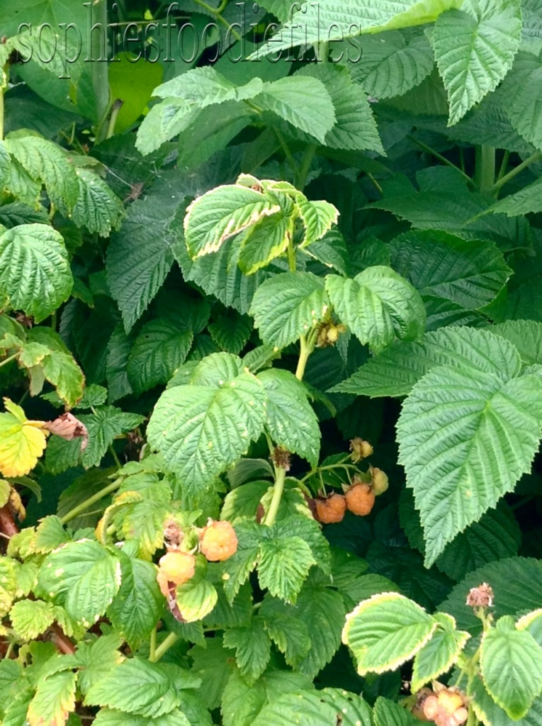 Orange raspberries!