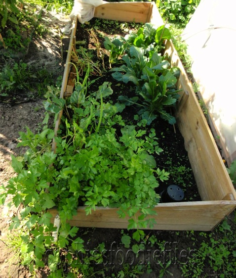 The cold frame!