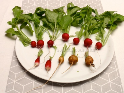 Round radishes, French breakfast & Helios