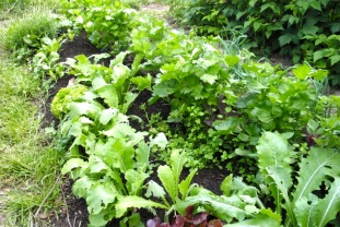 All grown onto lovely compost!