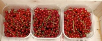 the last of the red currants!