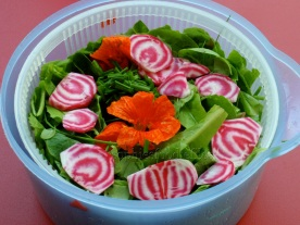 a mixed salad with edible flowers & raw sliced chioggia beets from the garden!