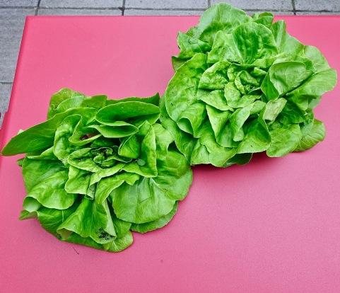 2 lettuces