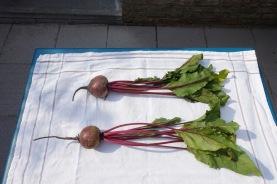 Bolivar red beets!