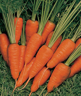 Chantenay Carrots!